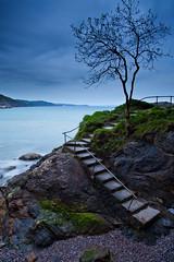 The Tree (eye pad) Tags: longexposure sea seascape tree beach canon steps devon le 2470f28l 5dmk3 lee09ndgrad leebigstopper