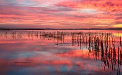 """Explosin"" (Pepelahuerta) Tags: raw lagos atardeceres lakers reflejos laalbufera leefilters canon5dmarkii ultraangulares pepelahuerta canon1740ef valenciaparquenatural"