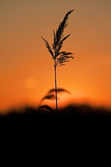 Sunset Silhouette (Vader 68) Tags: sunset orange nature beautiful beauty day clear