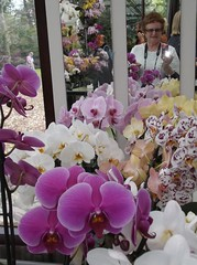 Selfie - orchids galore (loisberg12) Tags: flowers holland amsterdam mirror orchids selfie purpleorchid mirrorphoto keukenhofgardens floralbeauty floralappreciation loisberg12 orchidextravaganza mixedorchids