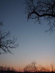 dawn (brightnoire) Tags: minnesota backyard oldhouse saintfrancis