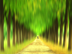 Walk into the Unknown (Batikart) Tags: park autumn trees summer brown man black blur color colour green art fall nature leaves lines yellow canon germany season landscape creativity carpet outdoors deutschland leaf flora colorful europa europe day pattern artistic pov sommer linden jahreszeit natur perspective august hannover gelb trunk mann colourful lime grn avenue ursula blatt effect landschaft bltter bume 500faves baum allee sander g11 stamm niedersachsen lowersaxony badenwrttemberg baumstamm 2015 100faves 200faves 300faves 400faves 600faves batikart 700faves canonpowershotg11