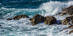 Solitude d'un Gabian (bobpado) Tags: sea mer bird canon vent vague oiseau mouette mistral mditerrane 24105 gabian littoral 60d