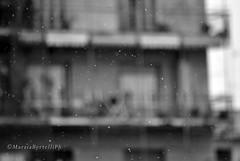 E fuori nevica_Napoli (marziabertelli) Tags: city white snow bn neve tormenta napoli bianca bianco freddo nero citt nevicata palazzi fuori goccia meraviglioso meraviglia soffice innevato nevica fuorigrotta