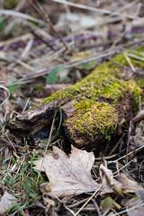 Forest Floor (K.G.Hawes) Tags: park plants plant dead moss flora detritus lichens mossy mosses