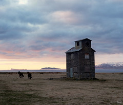 Oh Dreamy Iceland... (Yonatan Souid) Tags: sunset horses nature landscapes iceland scenery alone escape dream quietplace northiceland takeabreath theimmensity