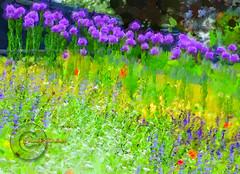 Bumble bee garden. (Edward Dullard Photography. Kilkenny, Ireland.) Tags: flowers kilkenny ireland garden jardin photoart impressionist cillchainnigh edwarddullardphotography kilkennycountycouncil