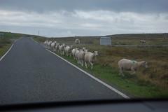 194_Eshaness (monika & manfred) Tags: nature scotland rocks wind hike mm surroundings shetlands eshaness shetlandislands shetlandisles drinkinghorse holidays3