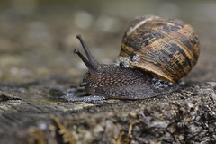 Slugs, Snails and puppy dog tails (Roadsternumber6) Tags: slugs snail puppy tail dog slimy