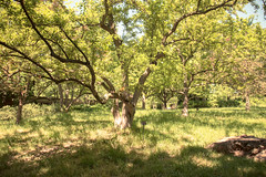 sitting for a spell (timp37) Tags: trees chicago tree me june garden illinois sitting nat spell nathalie botanic 2016