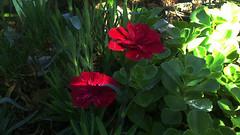 109 (jurinkof) Tags: fleurs blüten 花卉 цветы kvety květy