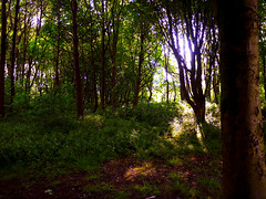 Light and Shade (Alan FEO2) Tags: city uk trees light green leaves forest dark outdoors woods branches shade stokeontrent staffordshire hanley undergrowth centralforestpark 2oef