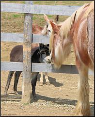 Cole meets Tonka (Taking pics, and eventually posting them!!!) Tags: horses ontario animals canon eos farm ancaster hamiltonontario 70d efex 18135mmstm pspx8 paintshopprox8 triplecfarm