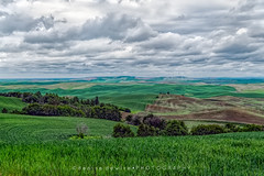 The Palouse - looking north (DeniseDewirePhotography) Tags: tree field clouds landscape washington view wheat north palouse steptoebutte thepalouse