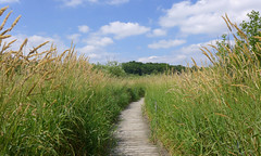 Happy place (lindakowen) Tags: boardwalk tallgrass swamp naturecenter harrietalexandernaturecenter roseville minnesota summer sky