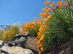 McNeill Bay_5425R (Michael.C.G) Tags: oakbay waterfront cliff flowers wind vancouverisland