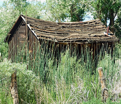 Gone to Weeds, Sierra Nevada, CA 6-16 (inkknife_2000 (6.5 million views +)) Tags: california trees usa mountains grass landscapes weeds cabin ruins neglected meadow skyandclouds barbedwirefence fenceposts easternsierranevada woodposts abandonedcabin cahwy395 swallmeadowsca dgrahamphoto