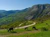 Plateau (Senol Demir) Tags: kastamonu mountain cow plateau ngc eeecotourism concordians green