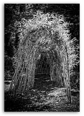 The Bower (Mabvith) Tags: uk england blackandwhite bw plant tree mono arch woven shrub weave bower silverdale carnforth rspb leightonmoss hooped
