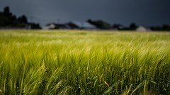 Hidden Spring (Kevin STRAGLIATI) Tags: storm france green field clouds spring dof village wind wheat campaign