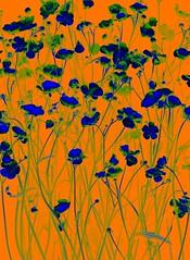 57395.18 Ranunculus acris (horticultural art) Tags: flowers ranunculus psychedelic wildflower ranunculusacris horticulturalart