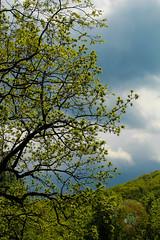 LRa05-24-16e-1336 (Glotzsee) Tags: trees tree clouds virginia cloudy blueridgemountains blueridgeparkway glotzsee