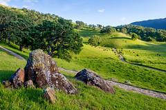 California springtime (Rod Heywood) Tags: oaks cattle grazing hiking trails green grass hills roundvalley roundvalleyregionalpreserve spring springtime rocks woodland grassland slopes ebrp eastbay greenhills oaktrees ranching california scenic ranchland