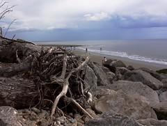 Driftwood on Charmouth Beach Dorset (Evergreen2005) Tags: beach driftwood charmouth