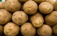extremely toxic carcinogenic gmo potatoes (tomwoods47) Tags: food toxic thank your genocide extremely monsanto carcinogenic gmos glyphosate globalists biotecs nongmofoodworld freetradedeals whoreport2015 bayerdupontsyngentapioneer