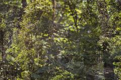 Park Life 35 (pni) Tags: park light tree suomi finland leaf helsinki branch multipleexposure trunk helsingfors tripleexposure multiexposure skrubu pni pekkanikrus