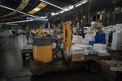 a thinker in fish market (kasa51) Tags: people japan tokyo tsukiji fishmarket turrettruck  styrofoambox
