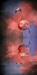 The Colors of My World (cd32919) Tags: reflection texture coral background flamingo feathers