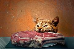 Chianina doc (Zz manipulation) Tags: art fame pasto gatto cibo bistecca ambrosioni zzmanipulation