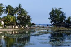 Water lily pond in Candi Dasa,  Bali (Sekitar) Tags: indonesia bali asia pulau island candi dasa pemandangan view pond seerosen water lily beautiful earthasia