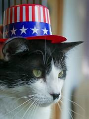 Big_01 (AbbyB.) Tags: pet animal cat newjersey feline shelter shelterpet petphotography easthanovernj mtpleasantanimalshelter