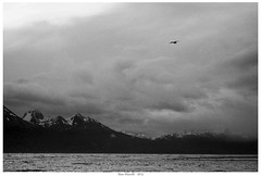 patagonia-landscape (Alan Mazzilli) Tags: chile trip travel bw white mountain snow black mountains love beagle southamerica nature argentina landscape tierradelfuego ushuaia outdoors nikon outdoor hiking wanderlust adventure explore sur trout channel bariloche photooftheday surdechile patagoniaargentina fluefiske petzl d90 villalaangostura orvis catchandrelease neverstopexploring flugfiske gopro  instapic travelgram galvanflyreels jegerogfisk instagood instanature instatravel winstonrods loonoutdoors fiskeavisen