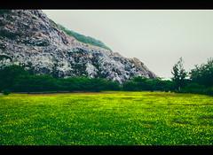 Landscape VT (Kiss Midori) Tags: landscape dong hoa flower sad beautiful