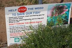 Caulerpa taxifolia (sunphlo) Tags: seaweed sign warning weed algae stkilda saltwater invasive boatramp introduced fisheries noxious boatchannel caulerpataxifolia