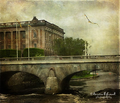 Alone in the stream (Kerstin Frank art) Tags: texture water alone seagull stockhom stockholmstrm norrbro thenorthbridge skeletalmess kerstinfrankart lenabemanna