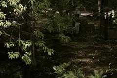 Japanse Tuin, Clingendael, Den Haag (milov) Tags: park tree leaves japanesegarden closed 85mm denhaag mf thehague clingendael fromraw japansetuin k01