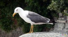 Barry Island July 2013 -  241 (marmaset) Tags: summer seagulls men beach seaside sand lads barry trunks swimmers sunbathers beachboys heatwave barryisland funinthesun rightcommon sunworhippers
