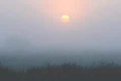 Im Nebel; Stapelholm, Bergenhusen (7) (Chironius) Tags: morning fog sunrise germany deutschland dawn nebel alba amanecer alemania dmmerung sonnenaufgang allemagne morgen niebla brouillard germania ochtend schleswigholstein matin  morgens zonsopgang mattina aube ogie pomie morgendmmerung morgengrauen niemcy dageraad  bergenhusen   stapelholm  pomienie szlezwigholsztyn