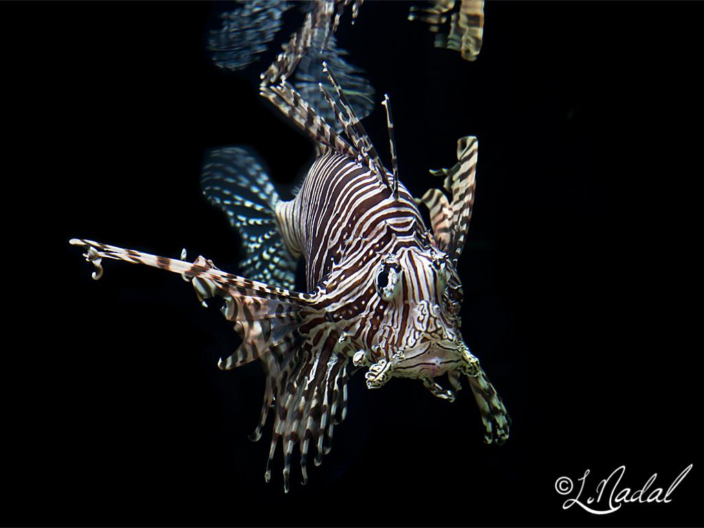 Escorpio y acuario yahoo dating
