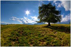 Lonely tree (Gottry) Tags: sky italy panorama cloud sun mountain alps grass backlight clouds landscape nikon italia nuvole outdoor wide valle fisheye val cielo sole grassland 8mm alpi montagna lombardia alpe granda valtellina lombardy d90 alpeggio samyang valmasino gottry emanuelerinaldi wwwerphotoseu