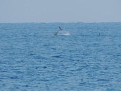 Delfini al largo di Capo Zafferano (Giovanni Valentino) Tags: capo bagheria delfini zafferano mongerbino