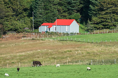 School House. (John2am.) Tags: uk sea sky mist mountains beach nature water fence landscape boats island scotland countryside cows sheep lakes hills locks mull d800 vision:text=0614 vision:outdoor=099