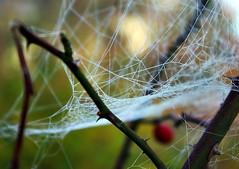 Premire gele d'automne (mamietherese1) Tags: autumn 123f50 eyegrabber sensationalcreationsofexcellence exoticimage esenciadelanaturaleza vpu1 inspiringcreativeminds natureitbest