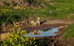 Ropes (Stephanie Cabrera Fotos) Tags: dog naturaleza dogs nature nikon campo perros naturelovers pastoraustraliano doglovers pastorbelga stephaniecabrera d7000 nikond7000