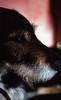 Mischlingsrüde Sam (borntobewild1946) Tags: dog sam hund nrw nordrheinwestfalen rheinland tierheim tierheimhund treu brav pfundskerl lieb maledog mischlingsrüde copyrightbyberndloosborntobewild1946