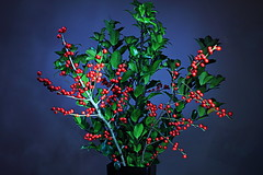 Holly bouquet (Pingmore) Tags: christmas light festive painted holly bunch vase bouquet strobist